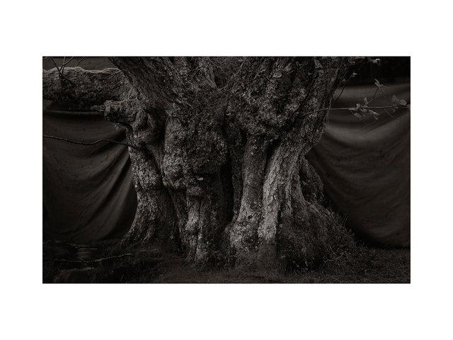 ARDVORLICH TREES94548.jpg