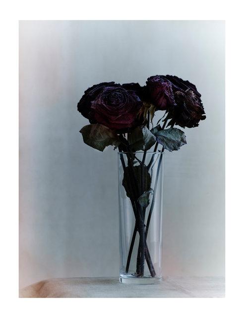 Old Rose.jpg