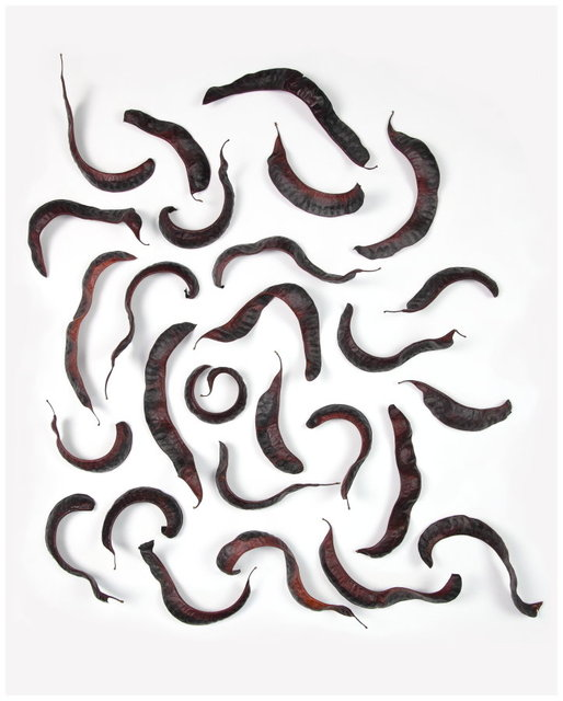 snakes 1 40x50.JPG