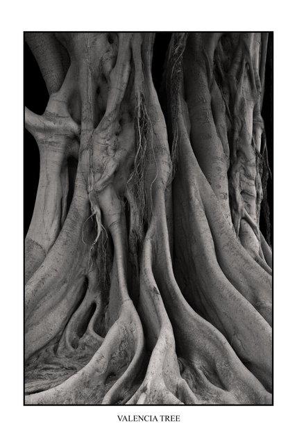 VALENCIA TREE.JPG