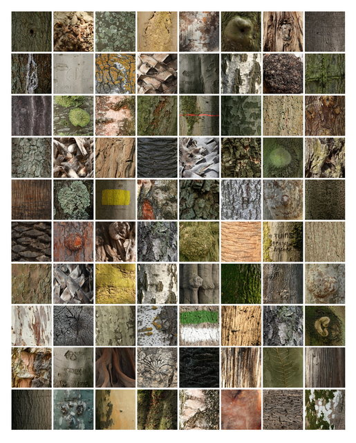 80 PORTRAITS OF A TREE