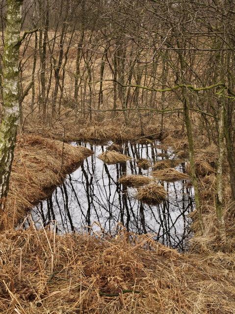 afgegraven veen