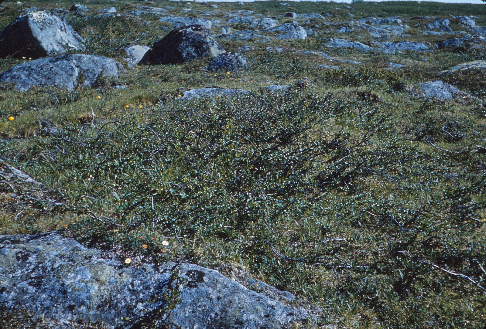 976 (12) vegetatie