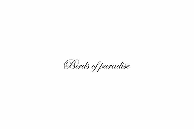 Birds of paradise tekst.jpg