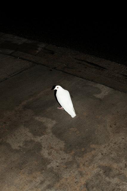 10_Dove In the Rain.jpg