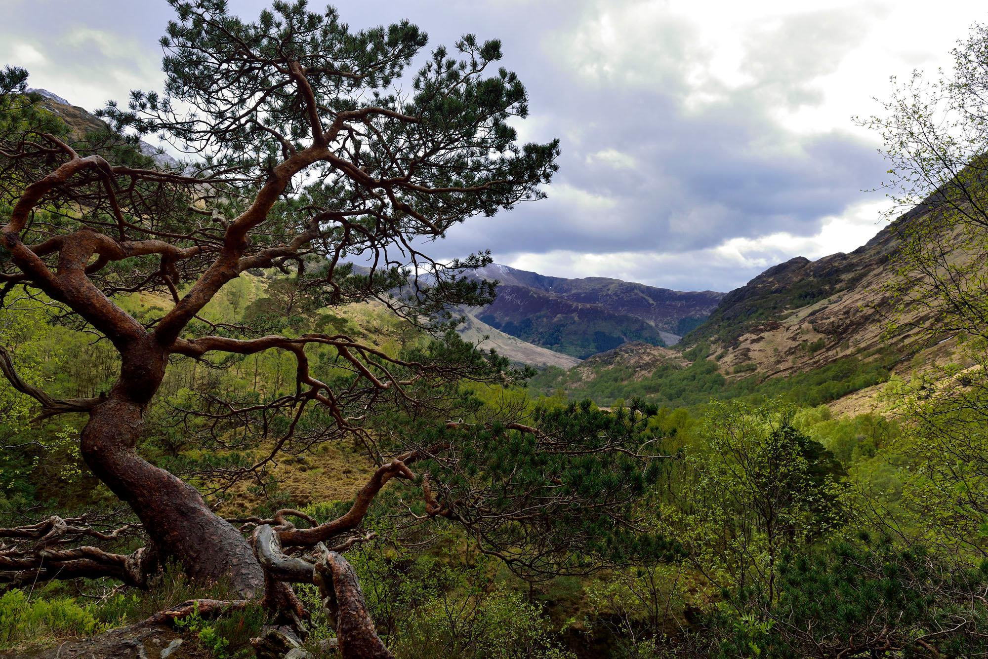Vallée de Ben Nevis
