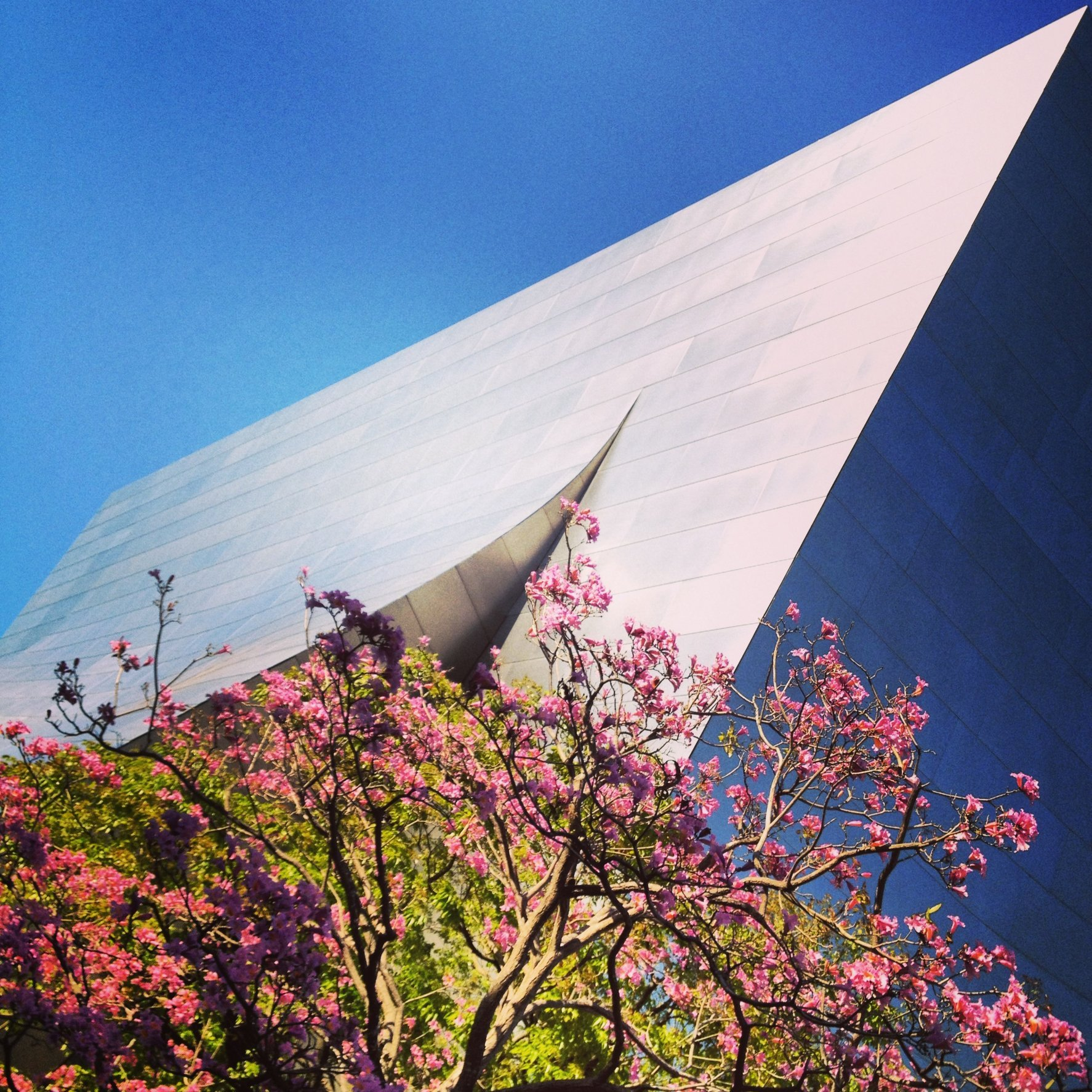 WALT DISNEY CONCERT HALL - ROSE 4
