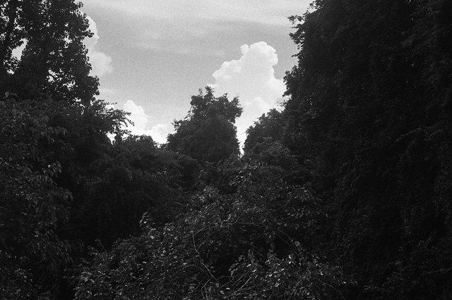 nc landscape028.jpg