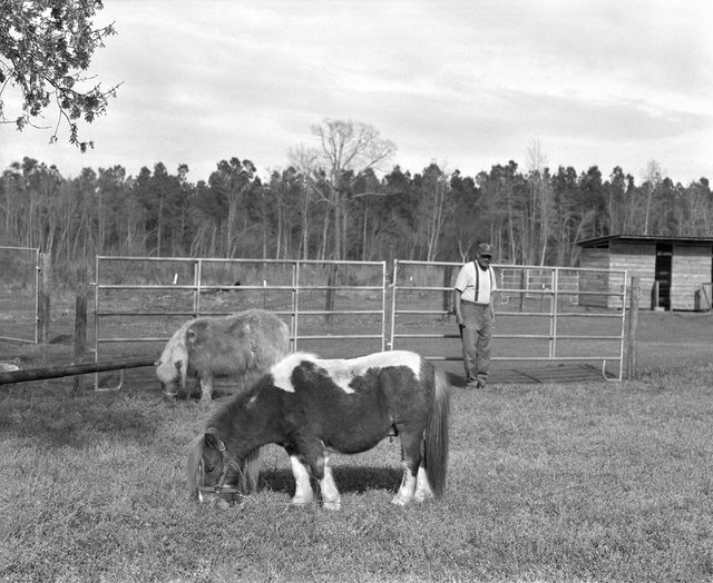 6_Grazing ponies_Horry County_SC.jpg