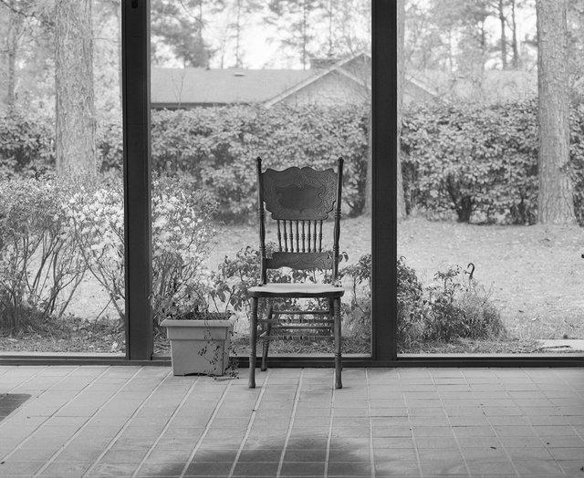 2_Pollen_Horry County_South Carolina.jpg