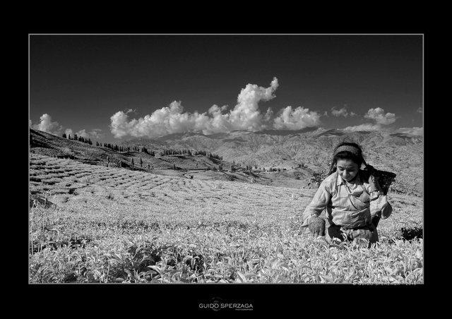 nepal tea. copy.jpg