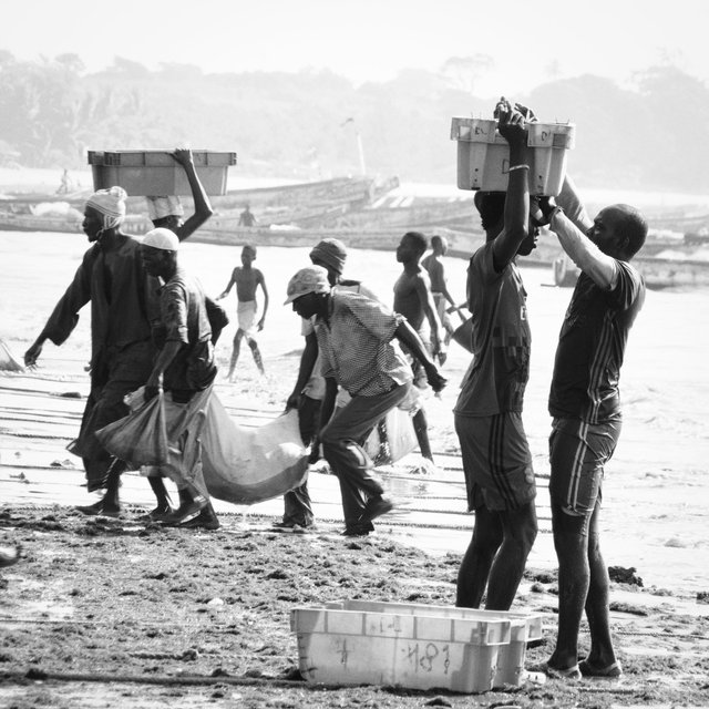 Gambia 2019 (68 van 75).jpg