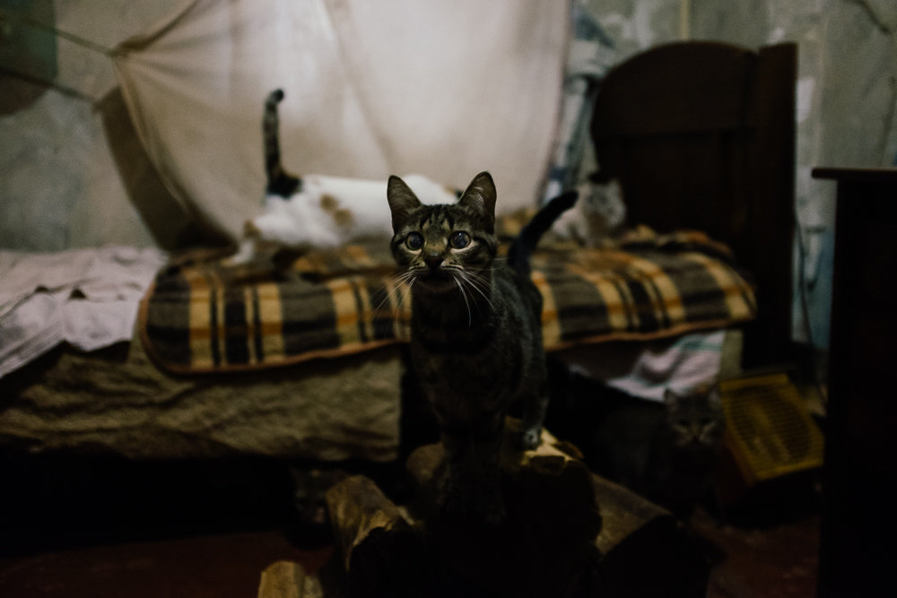 Curious kitten.