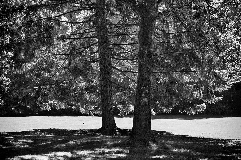Tree-bw73.jpg