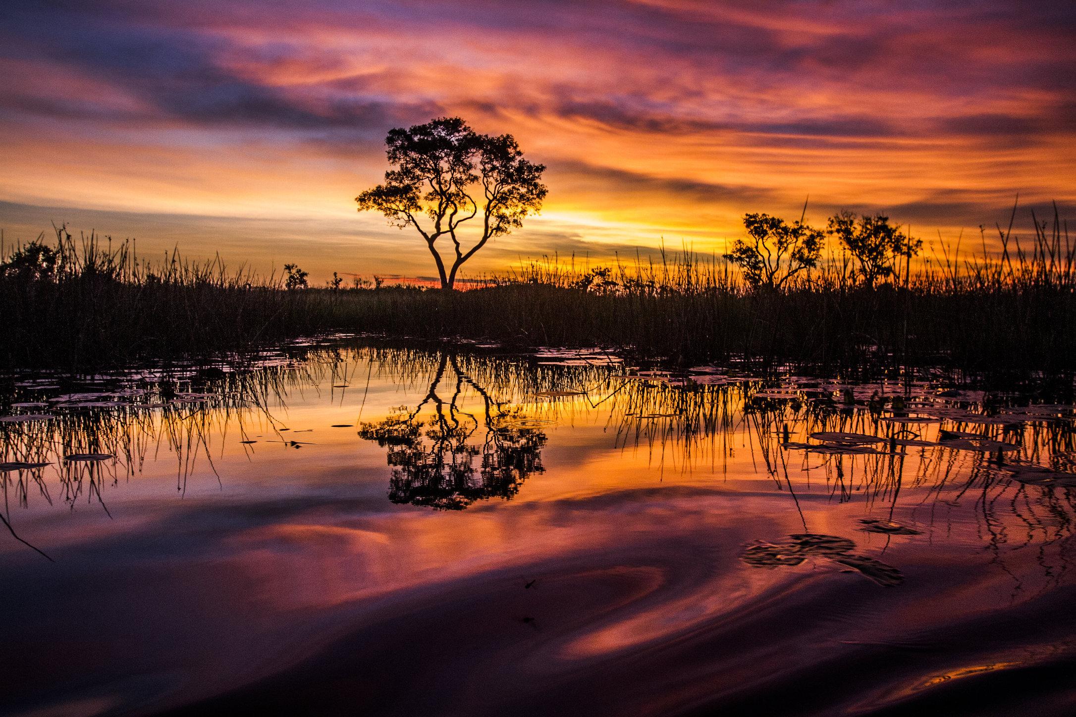 Okavango Delta, Botswana. 2013.
