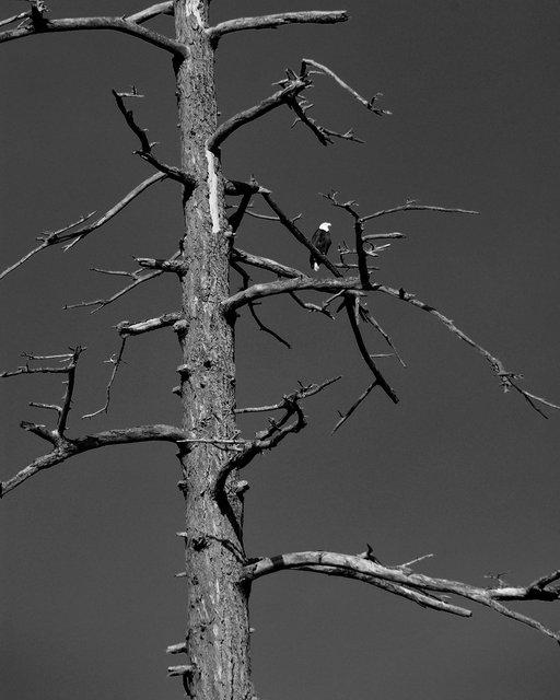 Tree-bw65.jpg