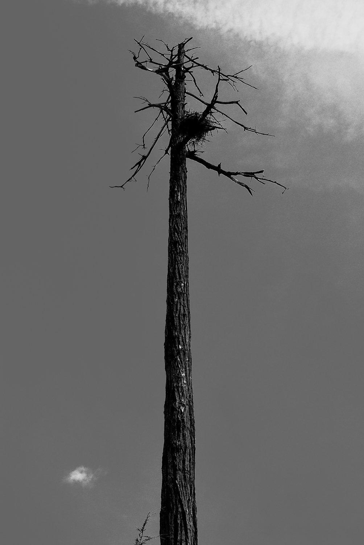 Tree-19bw.jpg