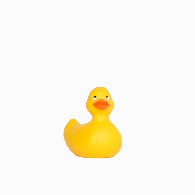 2016-4-Duck.jpg