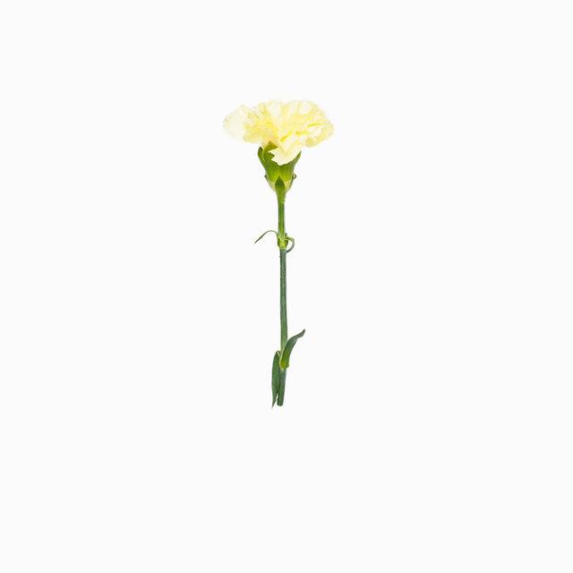 2016-4-Flower_a.jpg