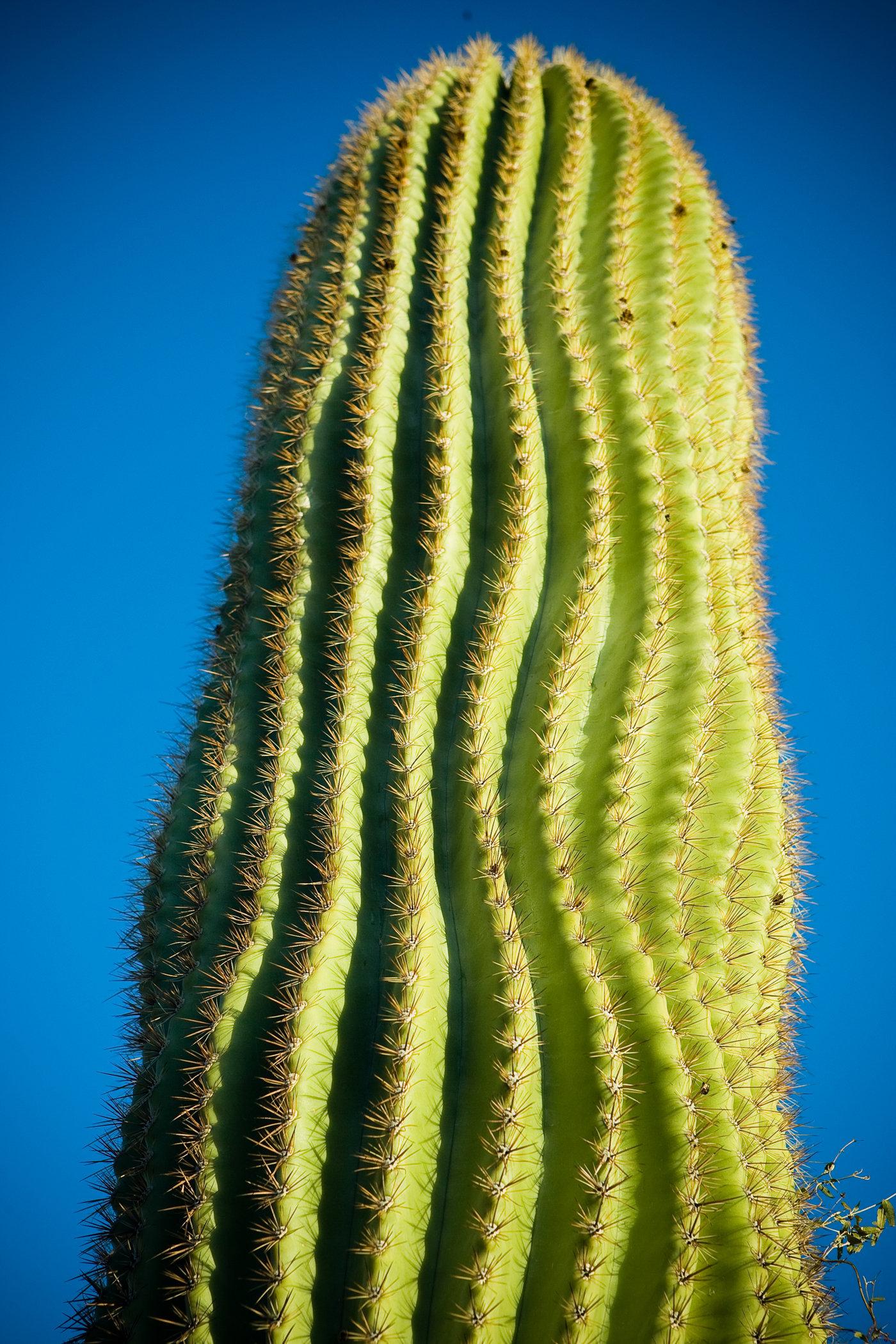 Saguaro Tales
