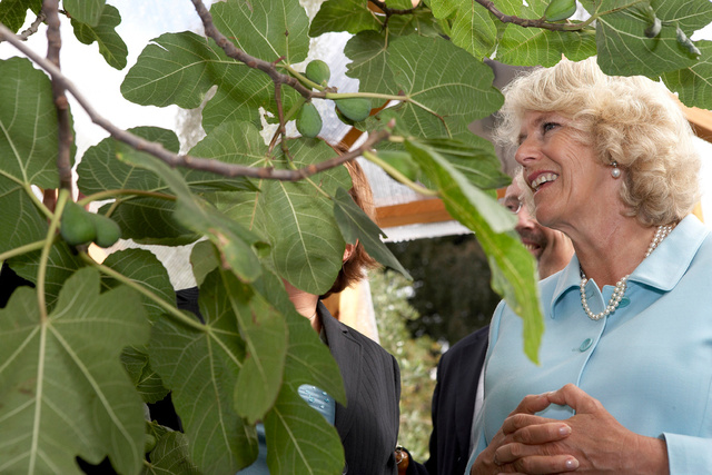 Duchess of Cornwall in Cheshire