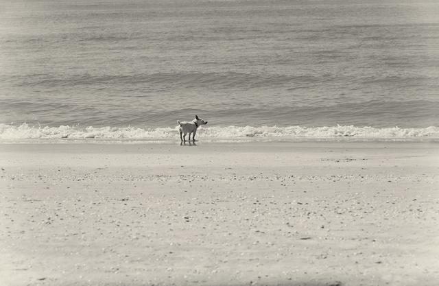 hondje-aan-zee-h1000-47.jpg