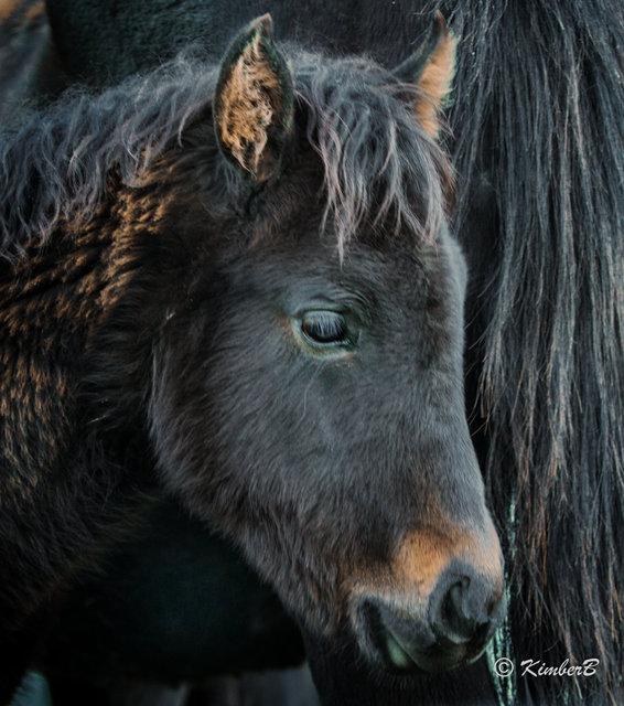 the foal-6.jpg