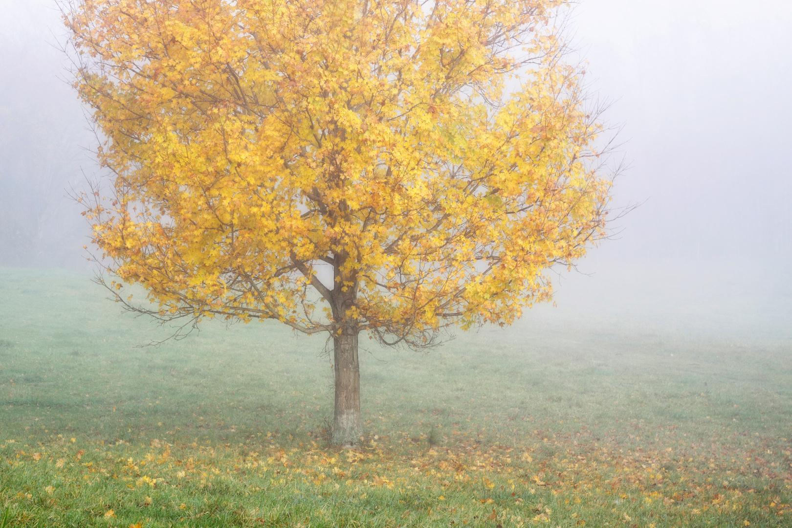 Autumn Morning, Ohio