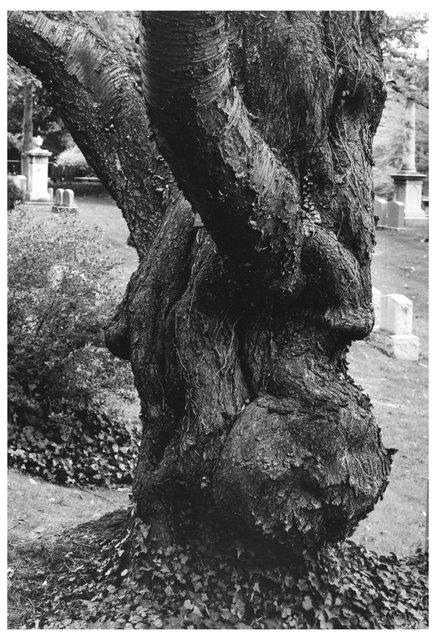 Trees  21.jpg