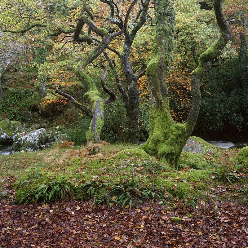 Dewerstone Woods