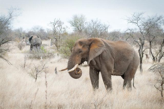 Elephants Hunt