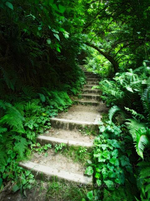 Fern_Stairs.jpg
