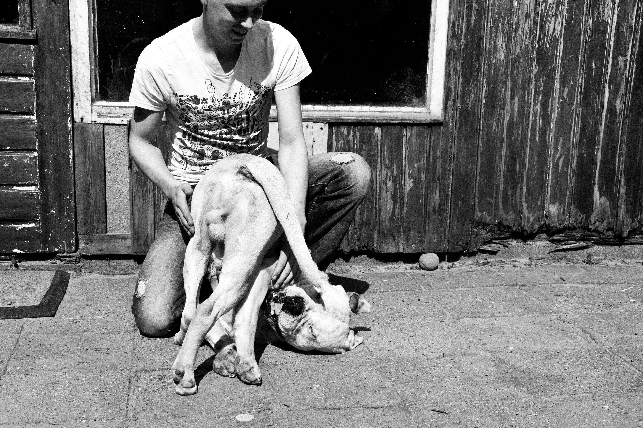 vechthonden (1).jpg