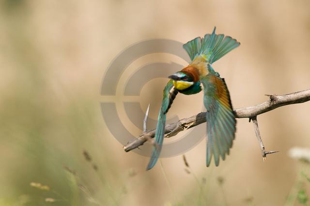 Tiere-Vögel-40.jpg