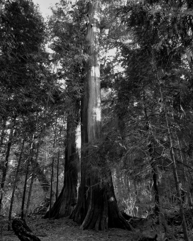 Tree-bw58.jpg