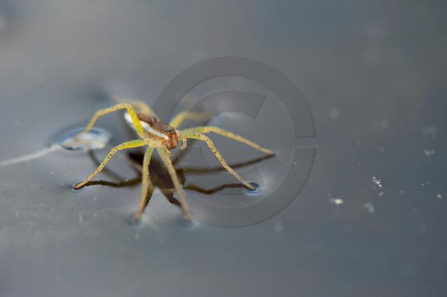Insekten_Copyright_396.jpg