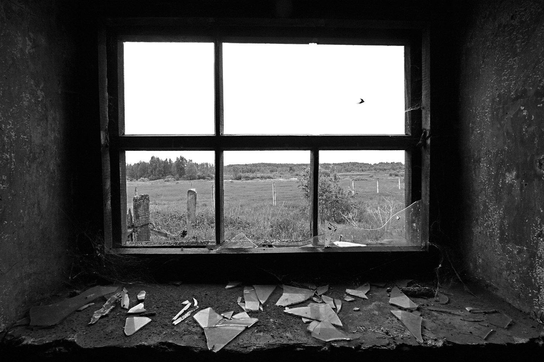 Barn Swallow (Hirundo rustica) I.