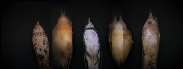 Study Skins, Holga 120N, Kodak Ektar 100, 2015