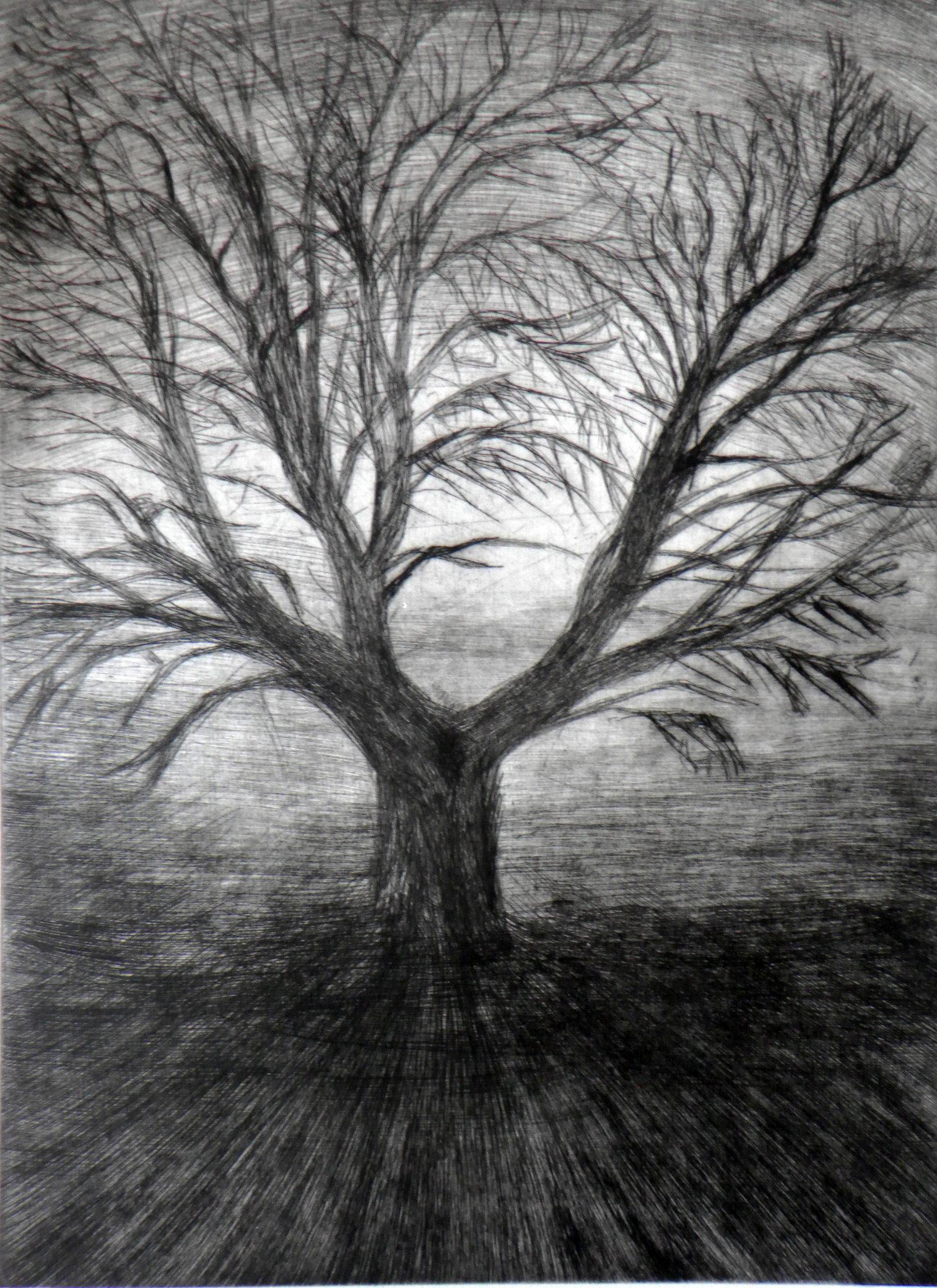 drzewo, sucha igla, 33x23,5