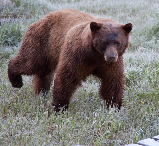 BearDeck4MG_9842-as-Smart-Object-1.jpg