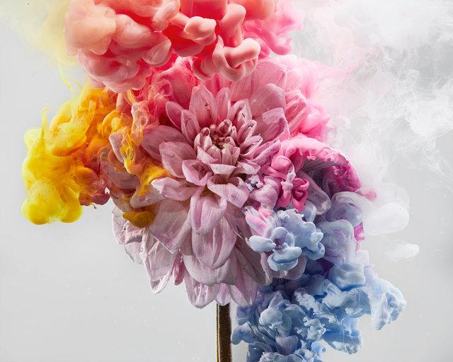 190129_FLOWERS0758 01.JPG