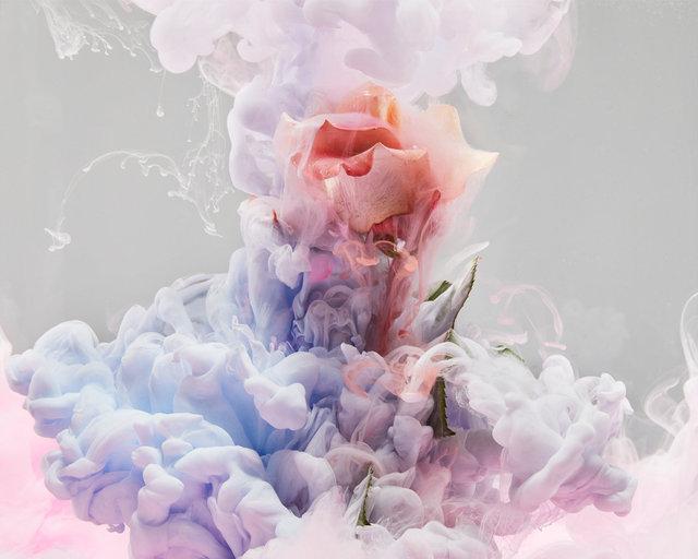 190129_FLOWERS0958 01.JPG