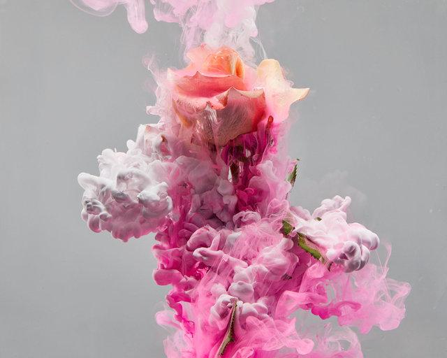 190129_FLOWERS0915 01.JPG