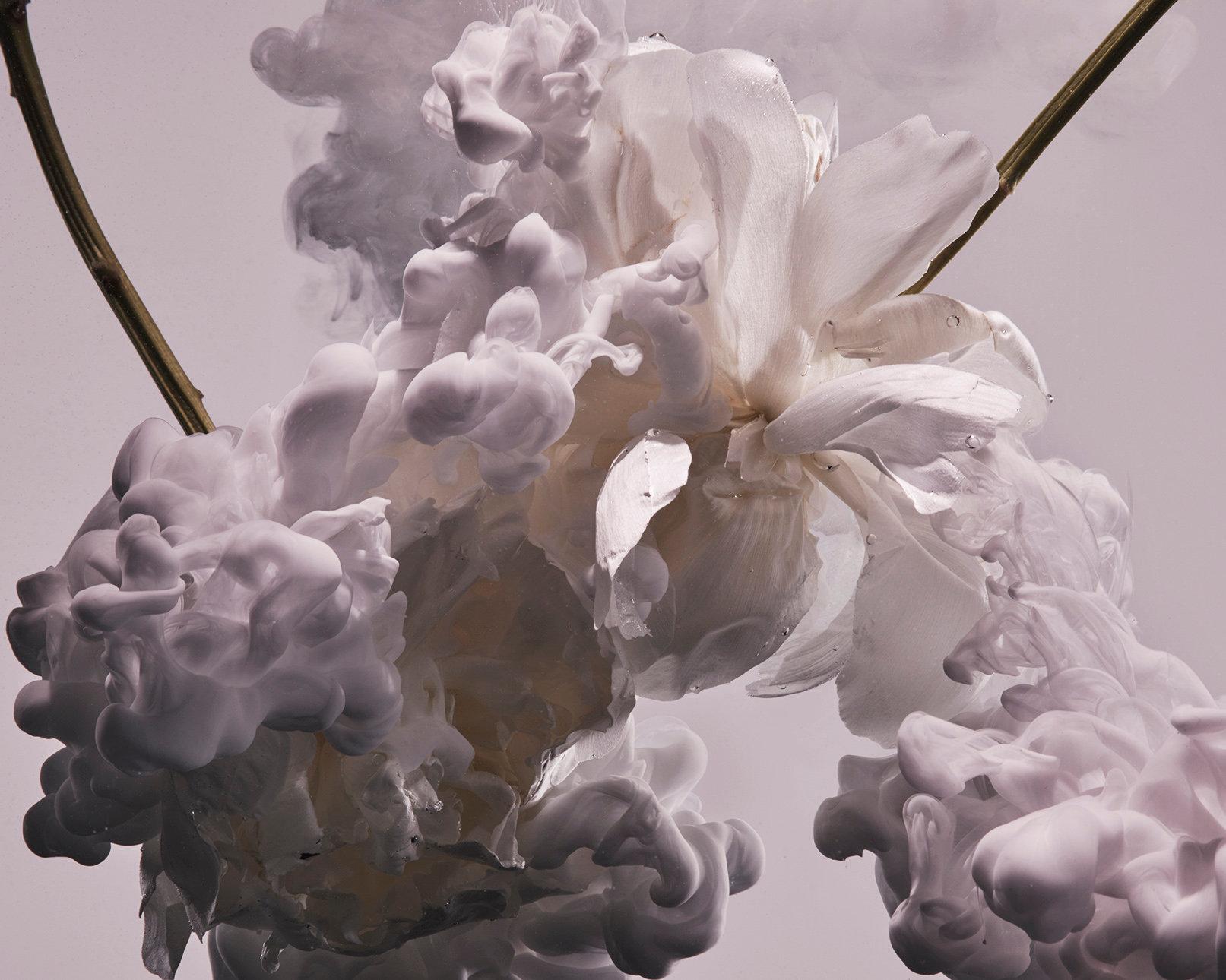 171123_Flowers_251 02 CROPPED.JPG