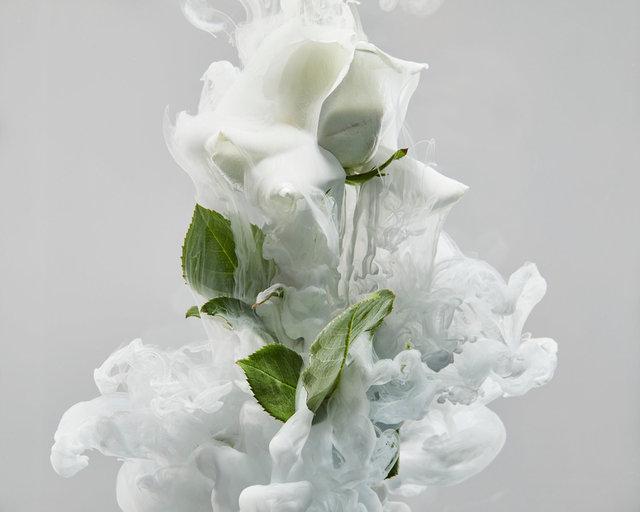190129_FLOWERS0846 01.JPG