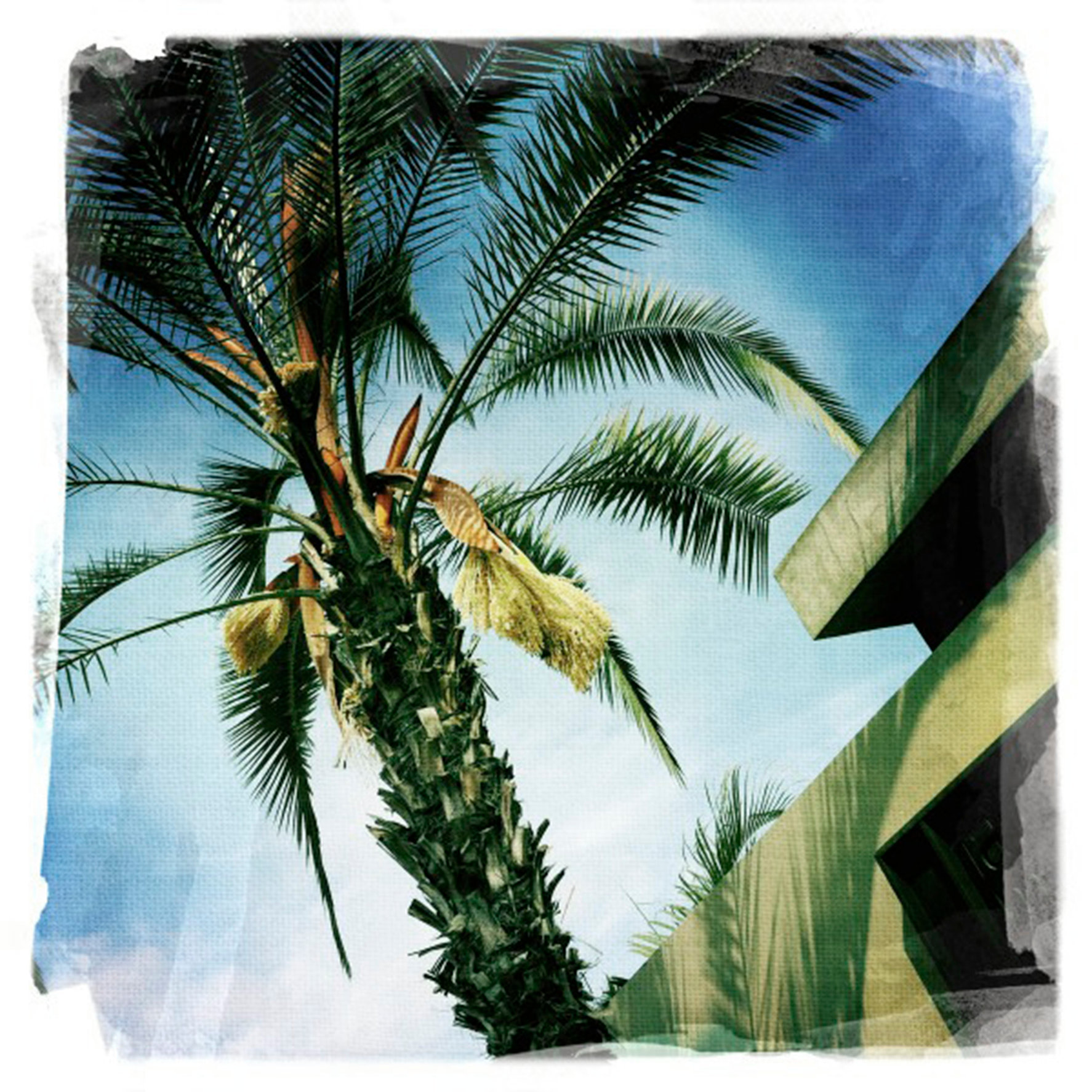 Tropical Lima