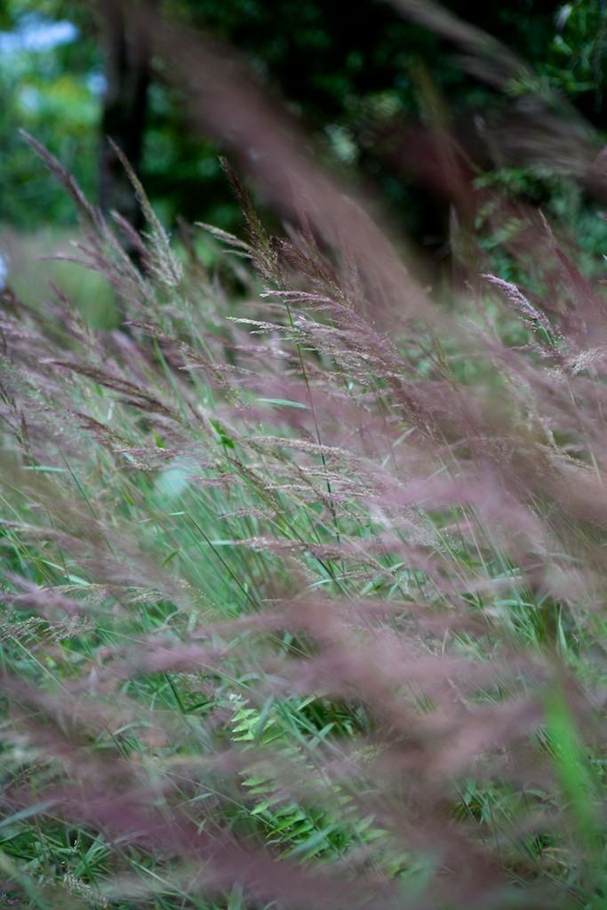 Vegetação em Twin Falls