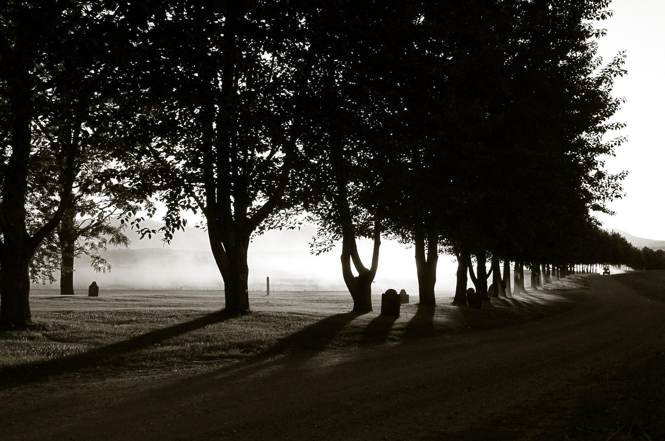 2.trees0081flat.jpg