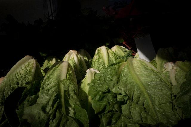 lettuce0125.jpg