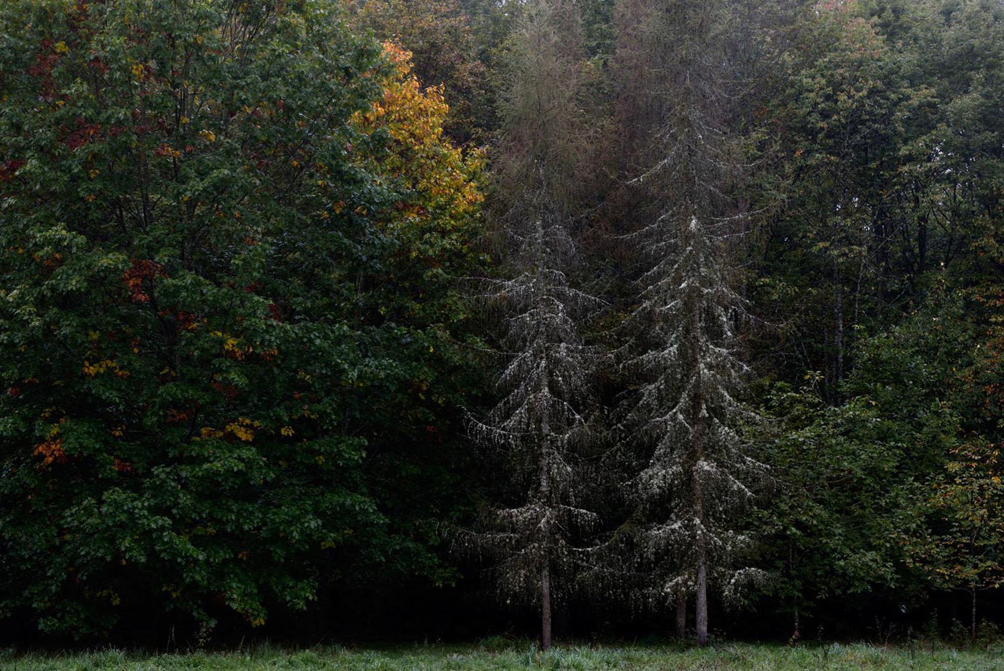 Forêt du Temple